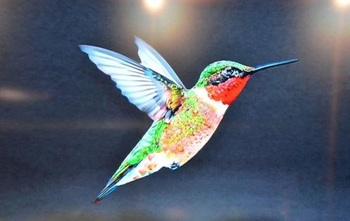 Hummingbird google algorithm