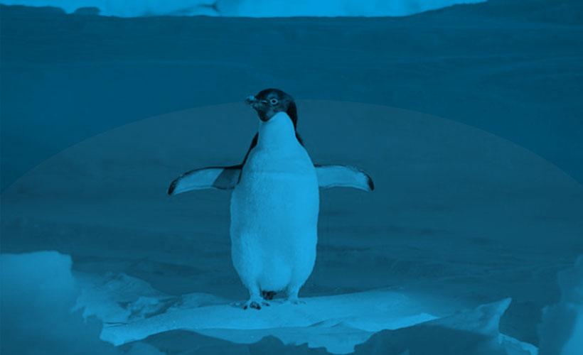 Linkbuilding Penguin